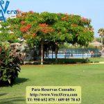 Jardines - Jardines Nuevo Vera - Vera Playa - Almería